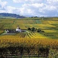 De wijngaarden